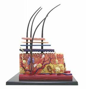 células-tronco-calvície